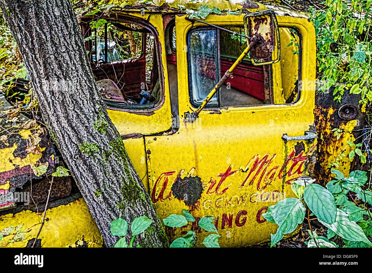 Classic truck in overgrown junk yard that has now become a forest. - Stock Image
