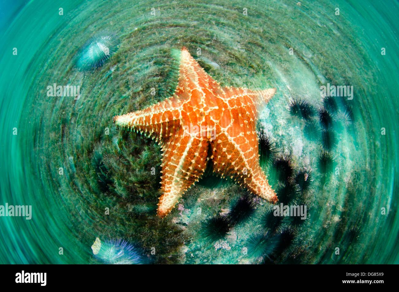 starfish underater blurred motion picture buzios island ilhabela, Sao Paulo, Brazil - Stock Image