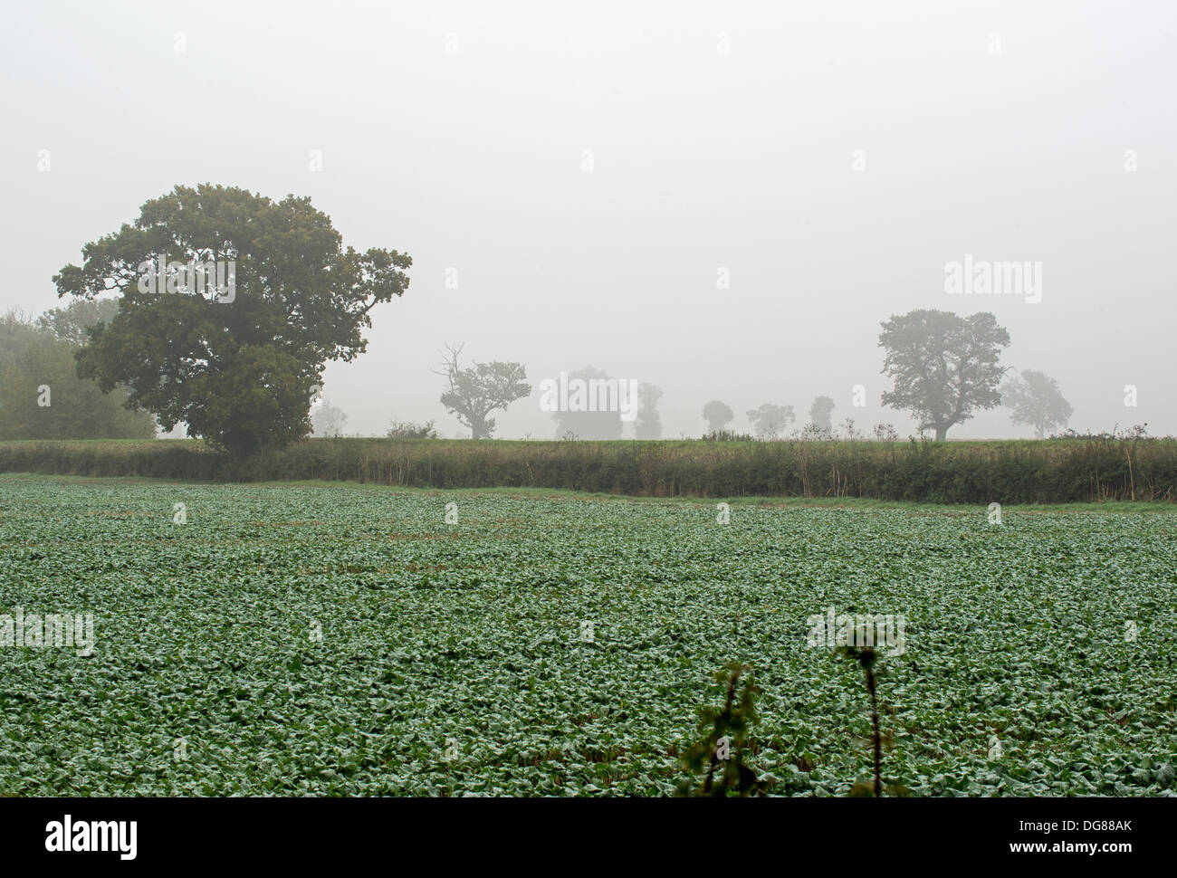Maxey, Lincolnshire, UK. 16th October 2013.   field near Maxey in Lincolnshire in the gloom and mist. Credit:  Lovelylight/Alamy Live News - Stock Image
