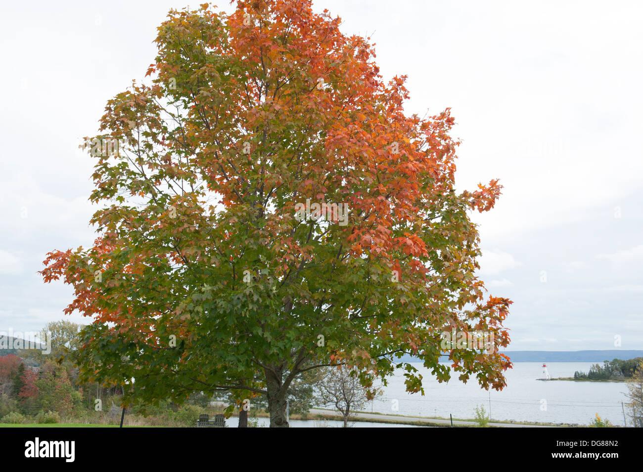 October in Baddeck on Bras d'Or Lake, Cape Breton Island, Nova Scotia. - Stock Image
