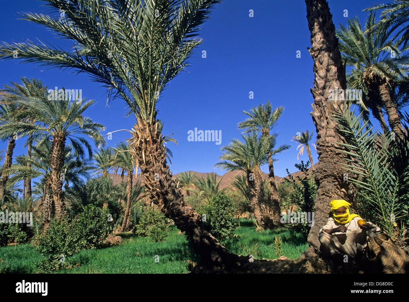 garden and palm grove of Timia,Aïr,Niger,Western Africa - Stock Image