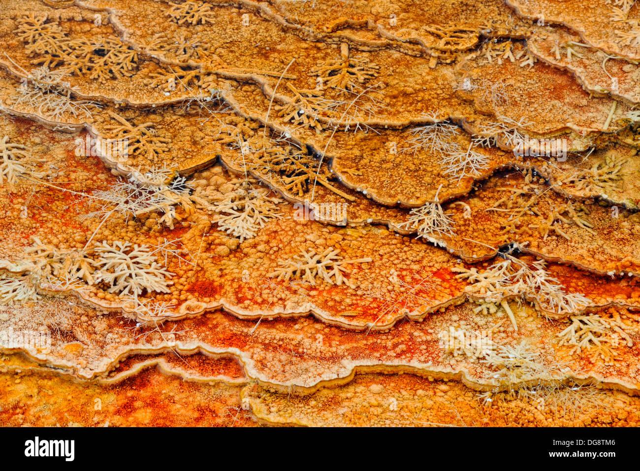 Cyanobacteria thermophyllic algae on tiny terraces, Grassy Spring Mammoth Hot Springs Yellowstone National Park, Wyoming, USA - Stock Image