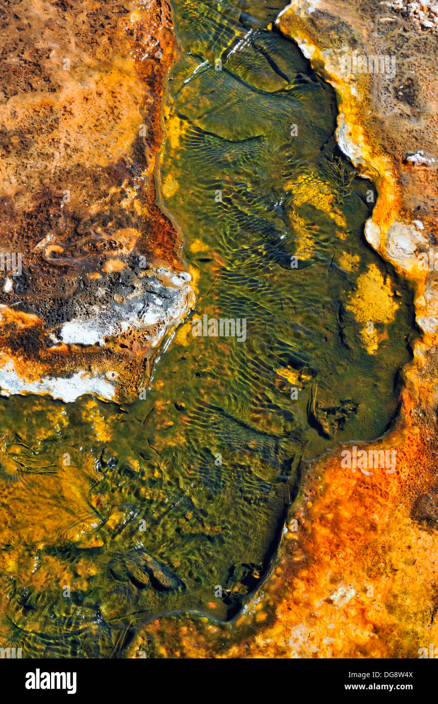 Thermophillic algae and cyanobacteria colonies in a thermal vent outflow stream Yellowstone National Park, Wyoming, USA - Stock Image