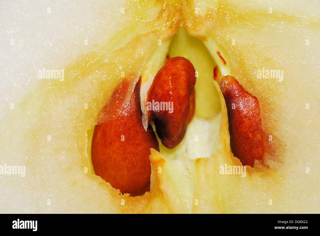 Apple Core macro closeup shot showing seeds - Stock Image