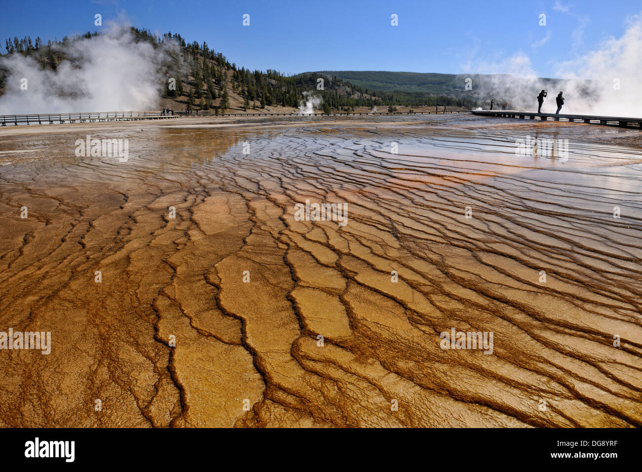 Thermophyllic algae colonies near Grand Prismatic Spring in the Midway Geyser Basin Yellowstone National Park, Wyoming, USA - Stock Image
