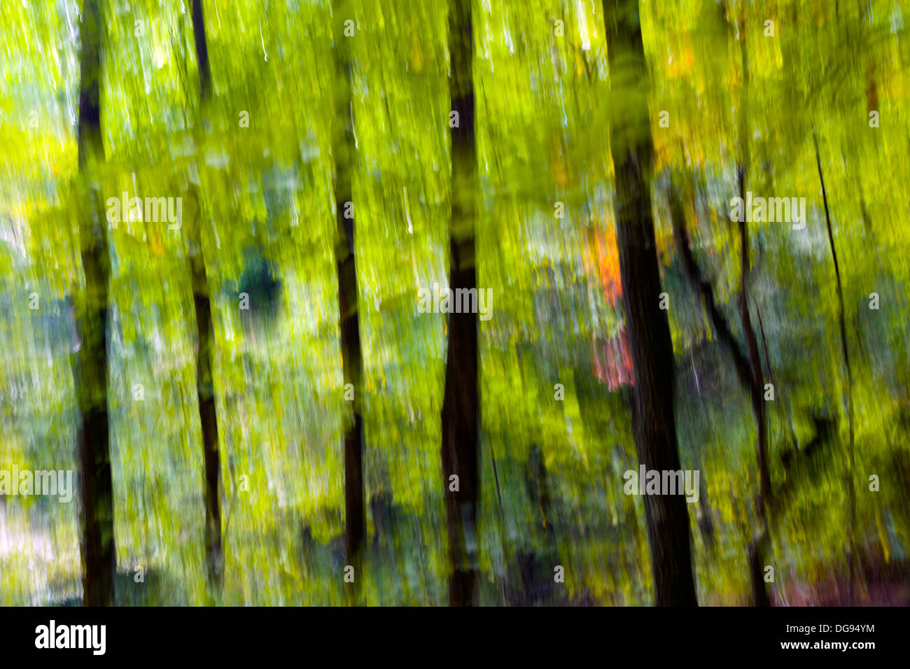 Abstract Tree Blurs on Coontree Trail - Pisgah National Forest - near Brevard, North Carolina USA - Stock Image