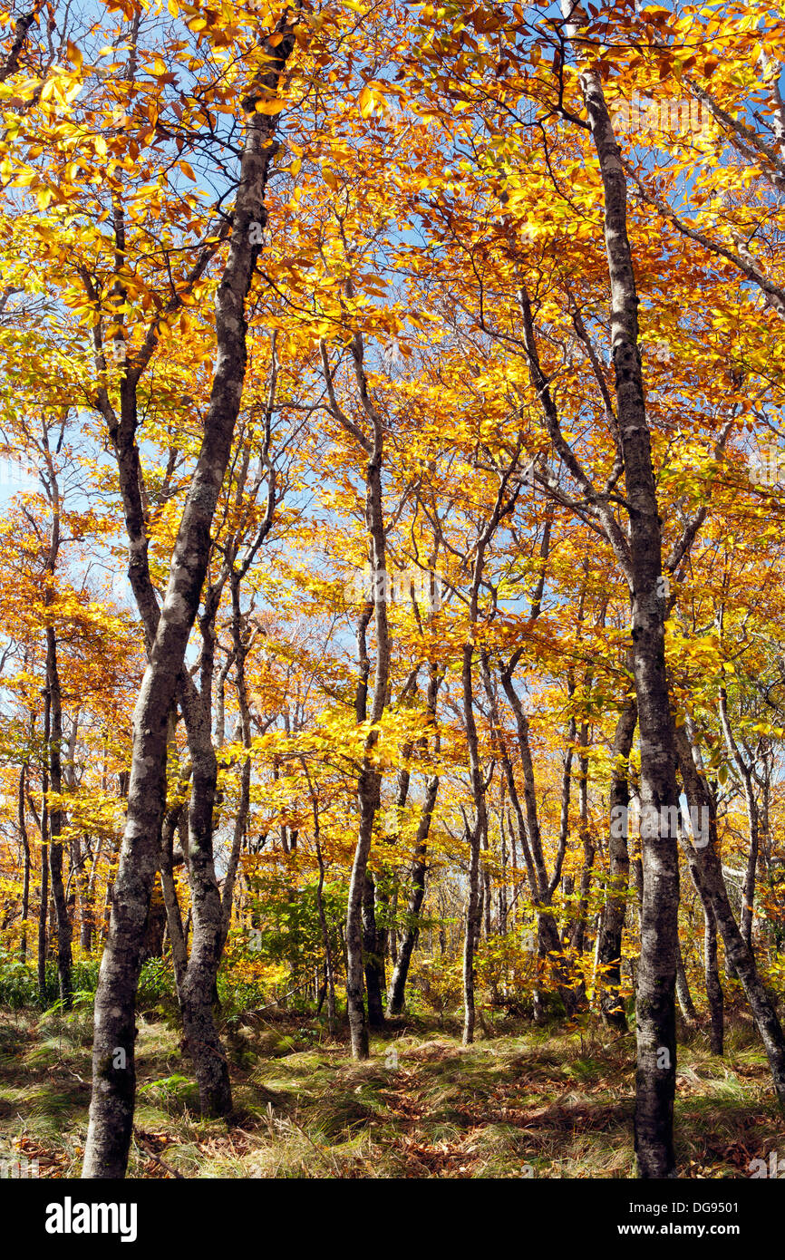 Mountain-to-Sea Trail - Craggy Gardens, Blue Ridge Parkway - Asheville, North Carolina USA - Stock Image