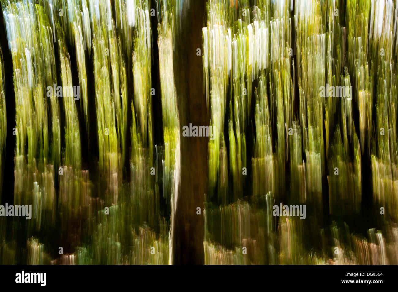Tree Blur on Mountain-to-Sea Trail, Craggy Gardens - near Asheville, North Carolina, USA Stock Photo