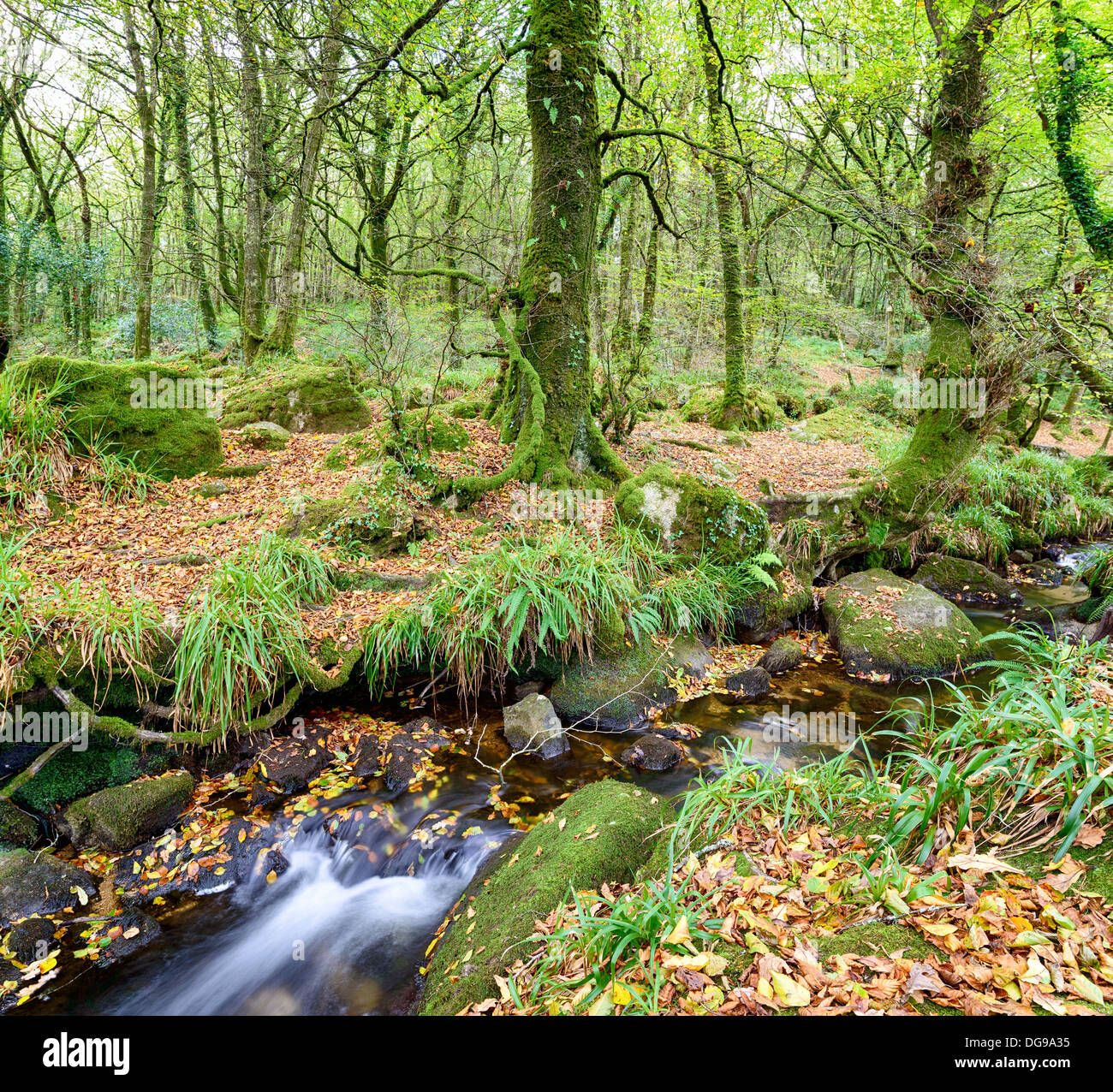 A forest stream flowing across mossy boulders on the edge of Bodmin Moor in Cornwall - Stock Image
