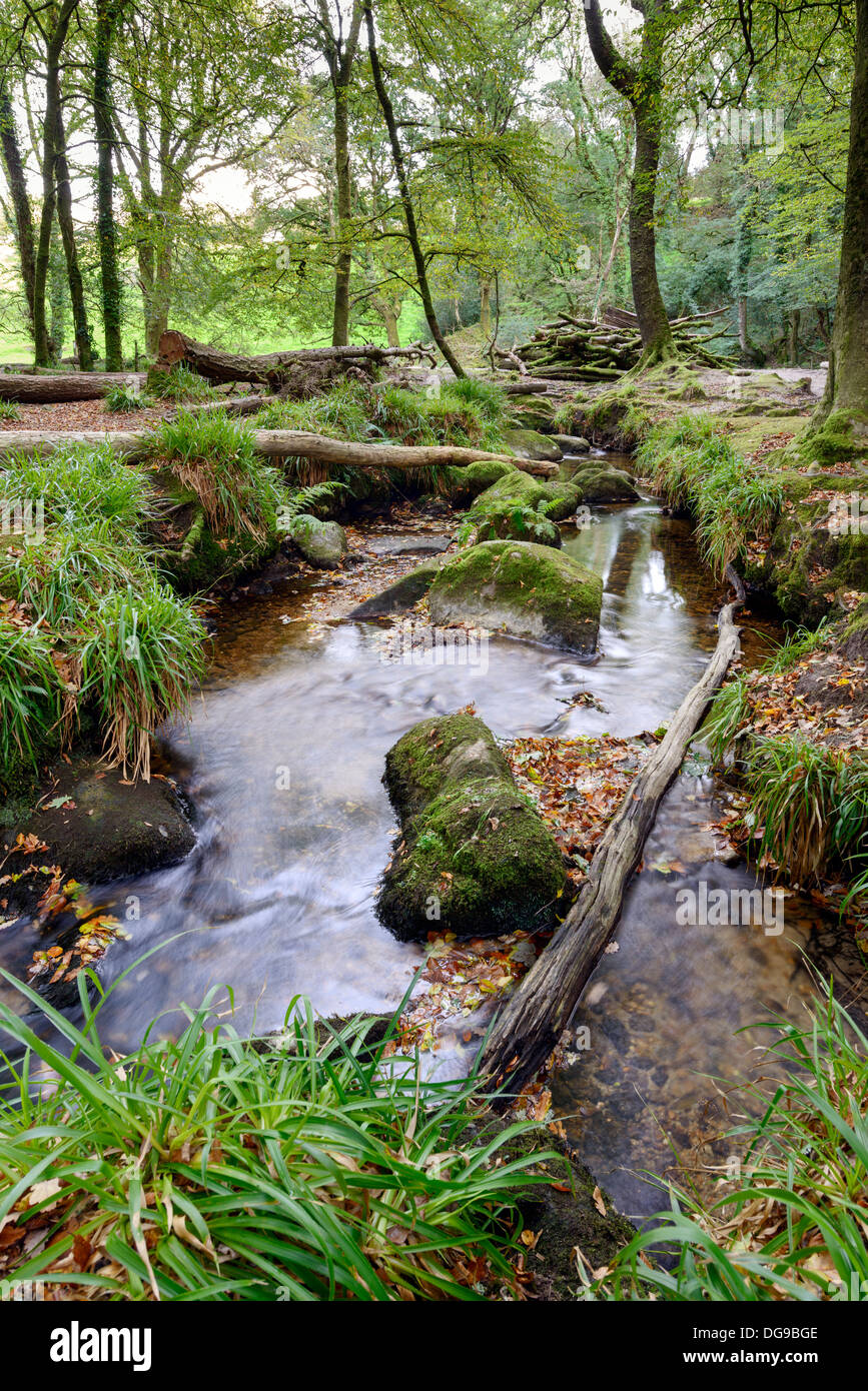 Forest Stream running over mossy rocks at Golitha Falls in Cornwall - Stock Image