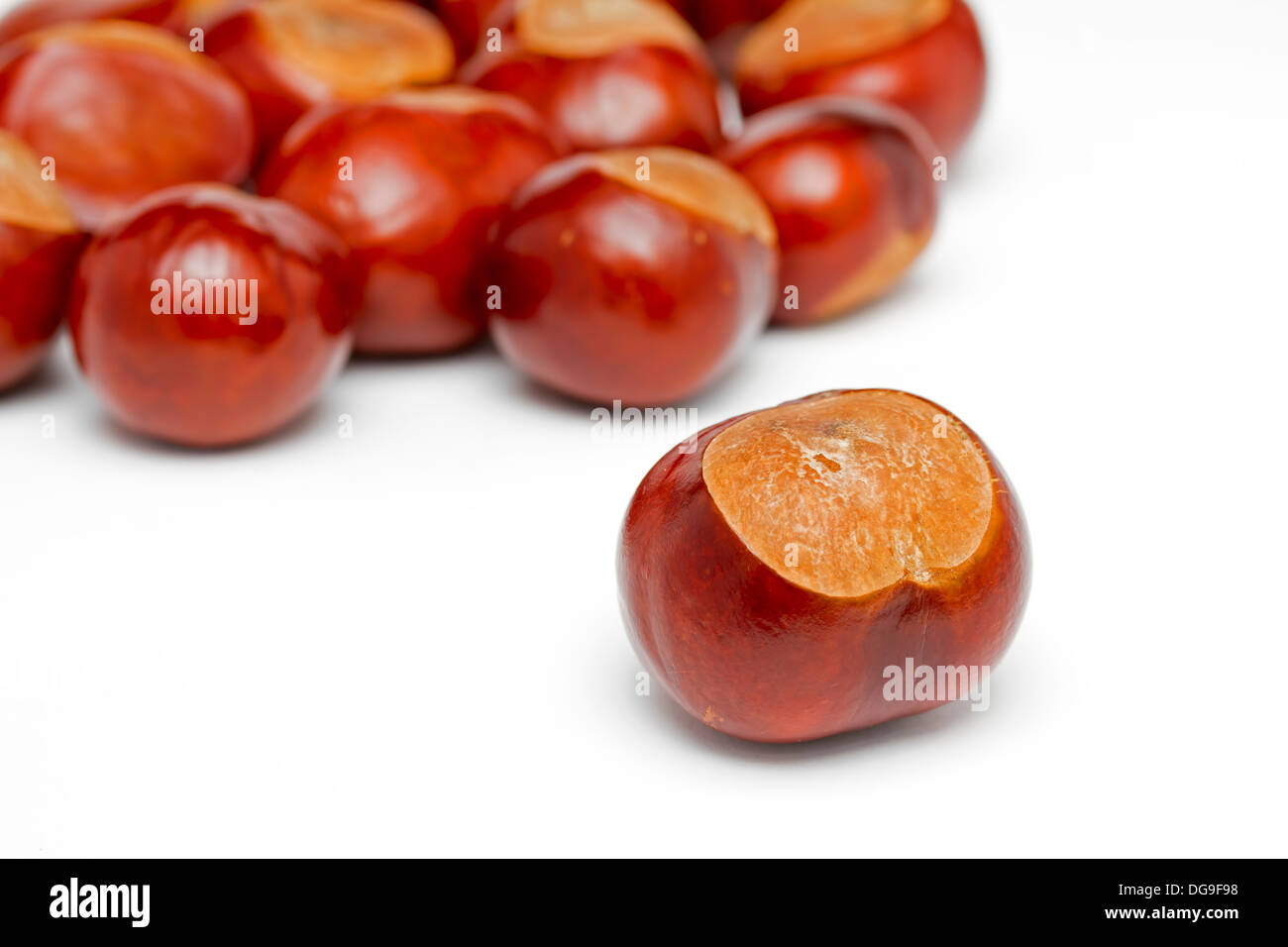 Conkers on a white background - Stock Image
