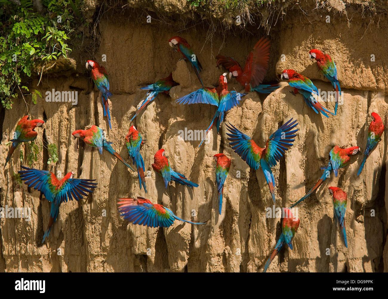 Manu National Park, Peru - Stock Image