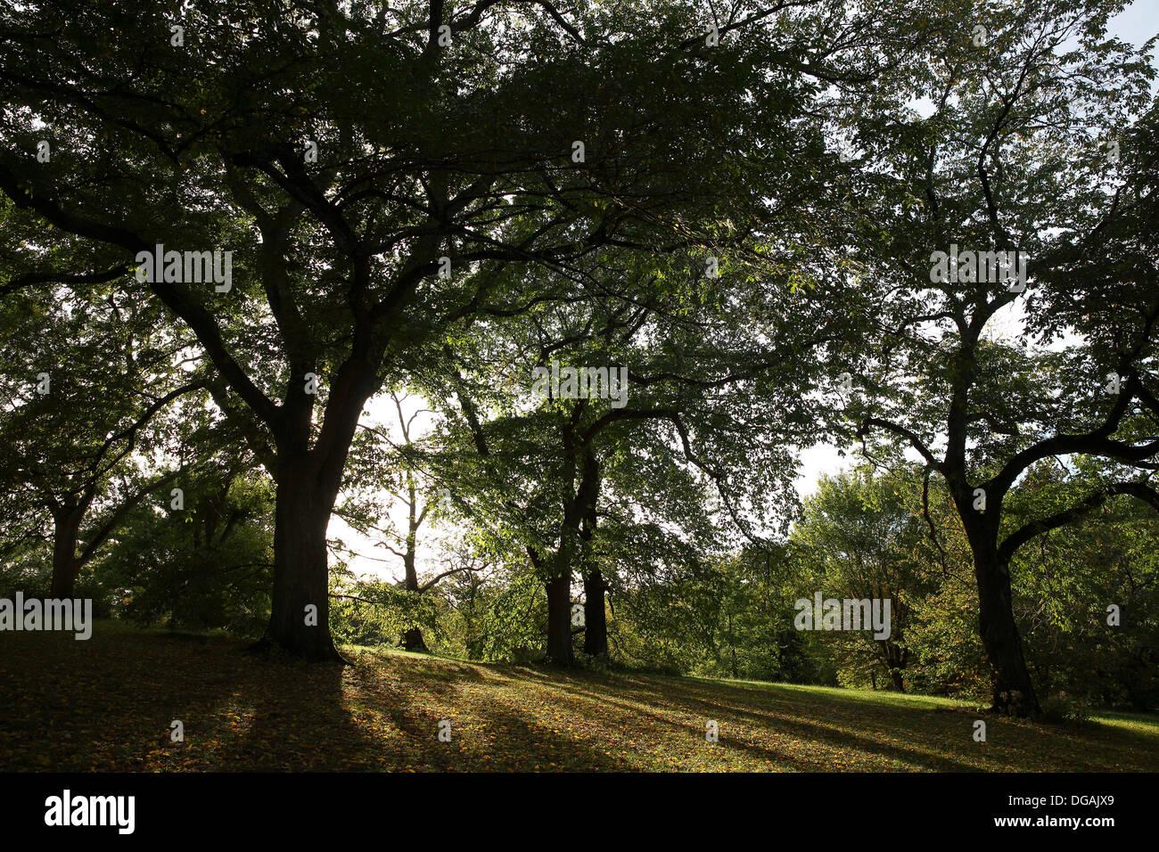 Arnold Arboretum, Boston, Massachusetts, USA - Stock Image