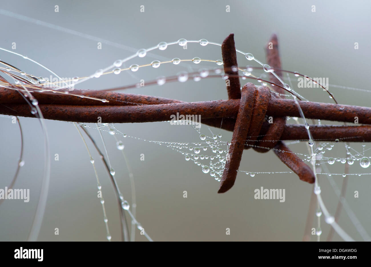 Barbed Wire Hair Stock Photos & Barbed Wire Hair Stock Images - Page ...