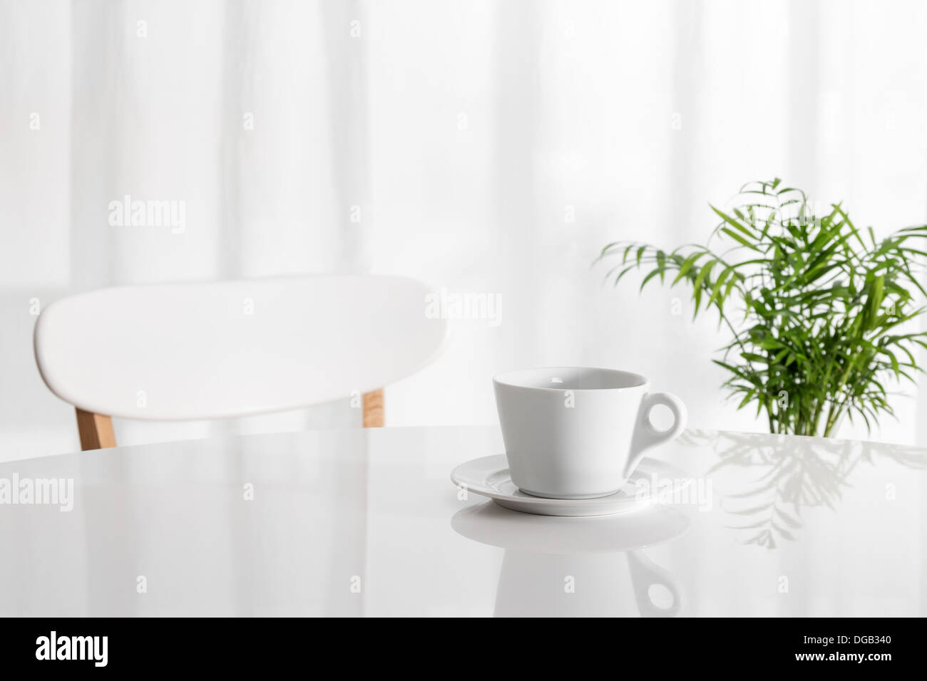 White cup on the kitchen table, with green plant in the background ...