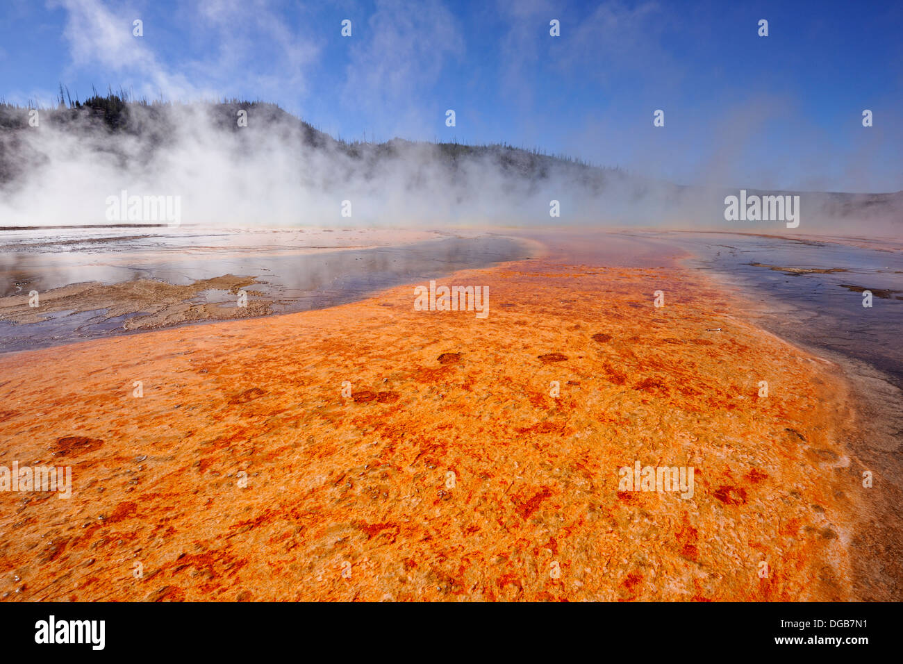 Thermophyllic algae colonies near Grand Prismatic Spring in the Midway Geyser Basin Yellowstone NP Wyoming USA - Stock Image