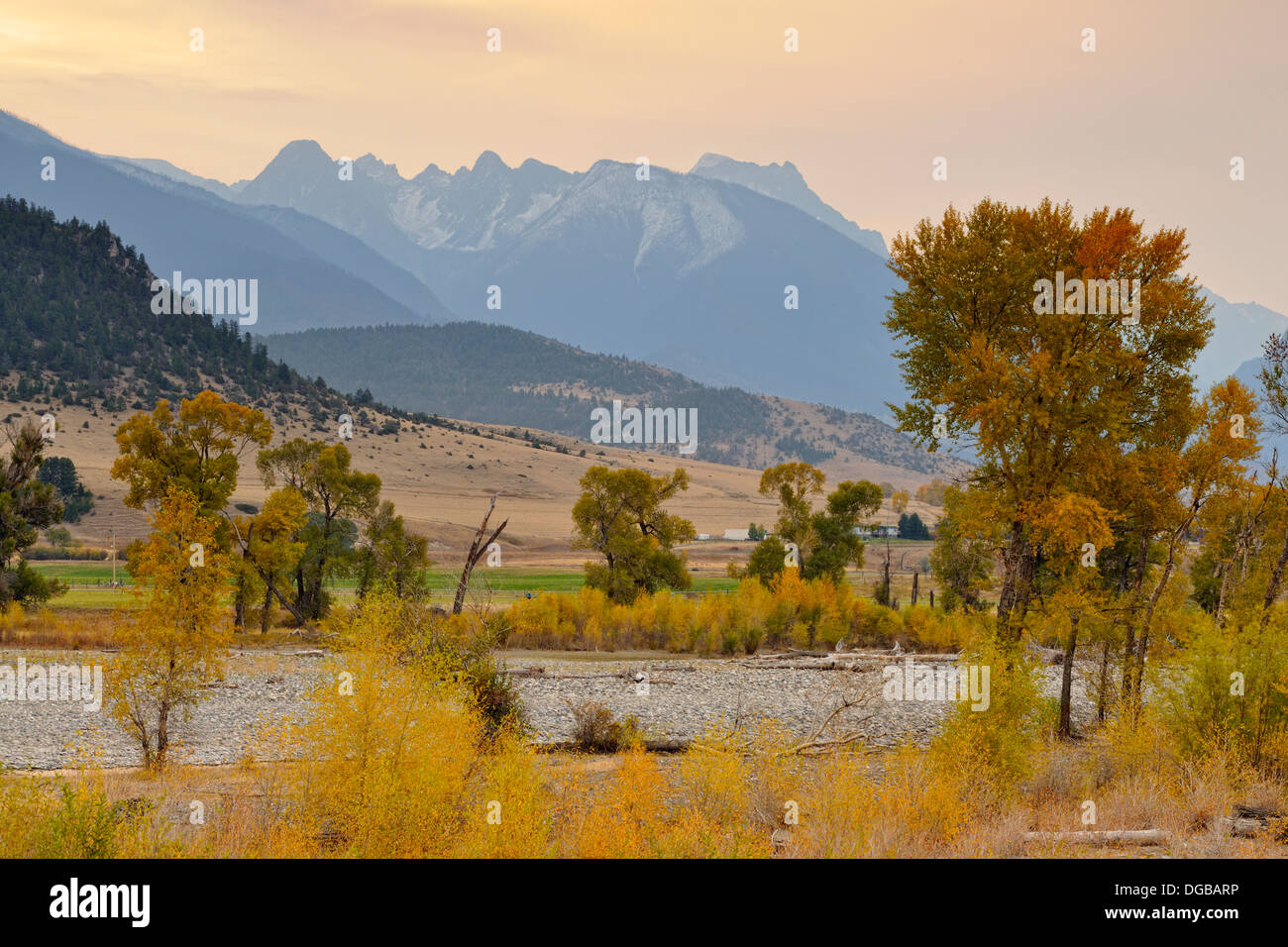 Autumn foliage on cottonwoods along the Yellowstone River with the Absaroka Range near de Puy Spring Creek Livingston MT USA - Stock Image
