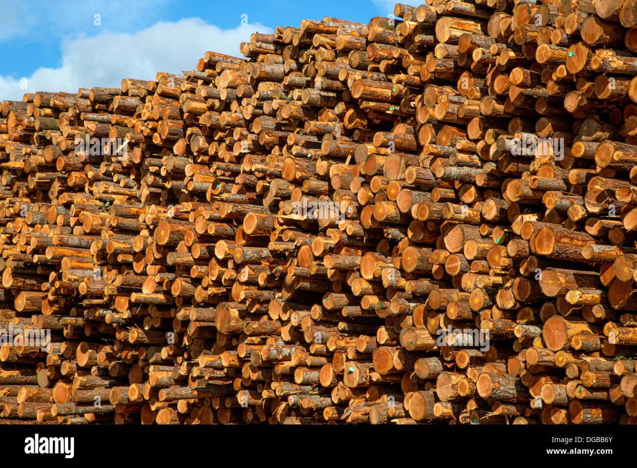 Large log pile, Oregon - Stock Image