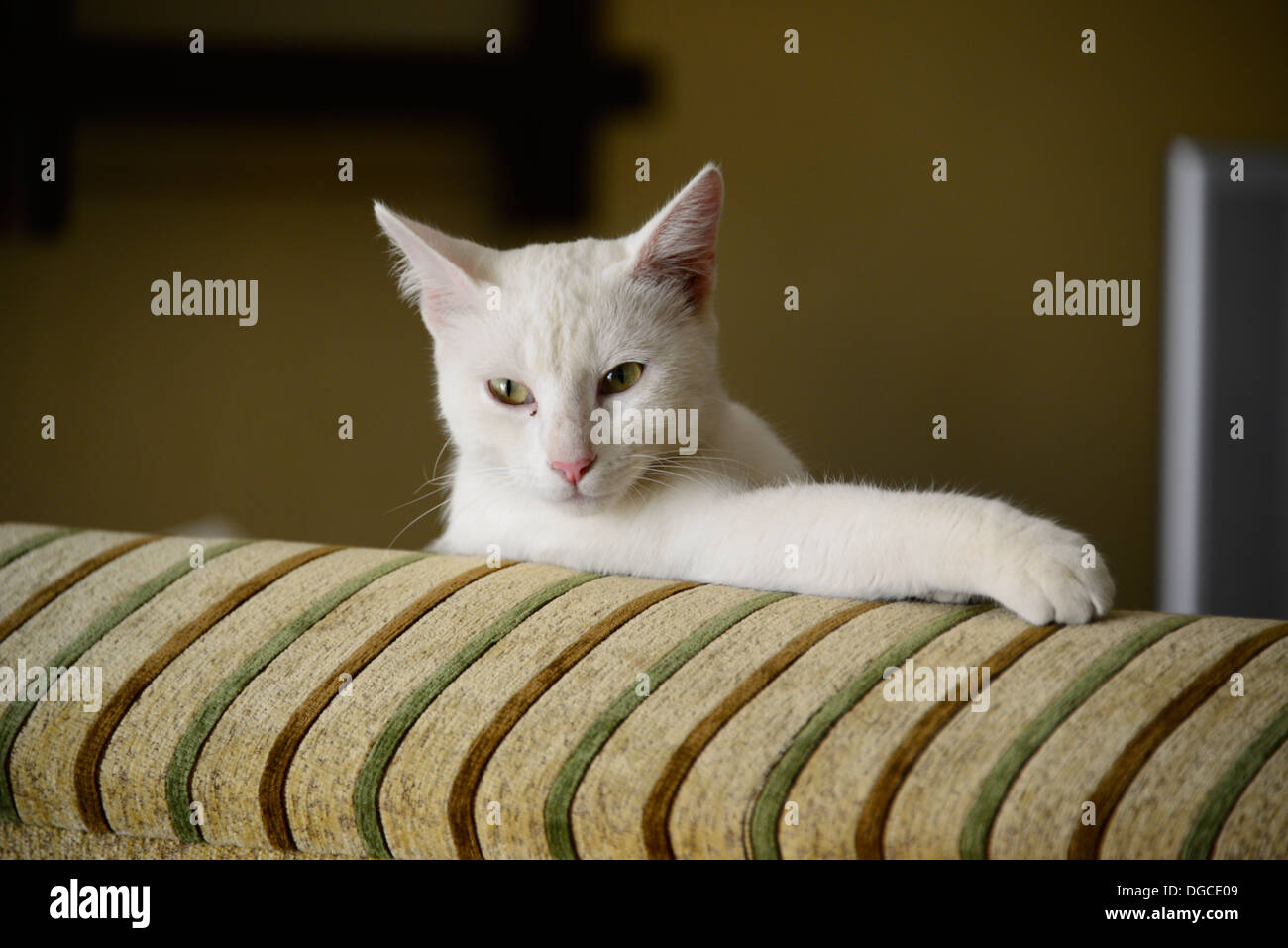 White cat portrait. - Stock Image