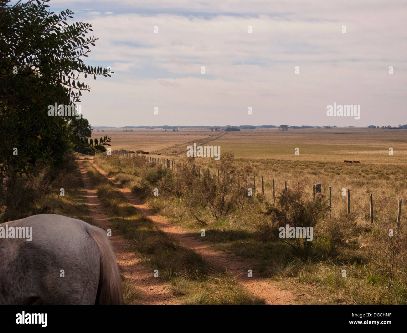 Criollo horse on dirt track, Uruguay - Stock Image