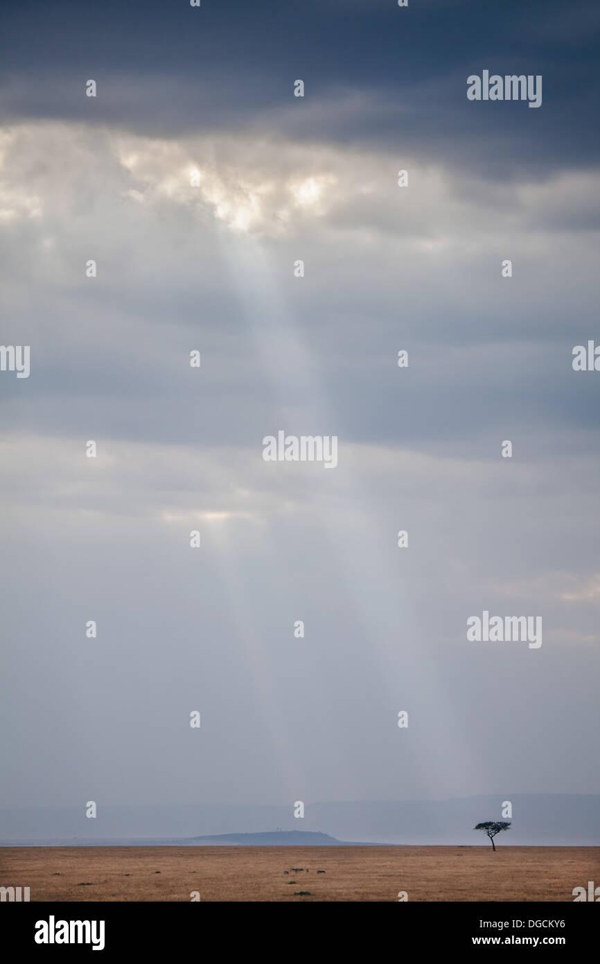 A beam of light illuminates a lone tree in the Maasai Mara - Stock Image