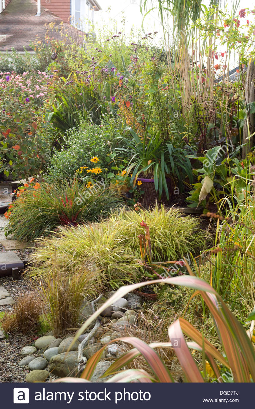 Suburban Garden In Autumn With Large Borders Of Ornamental Grasses