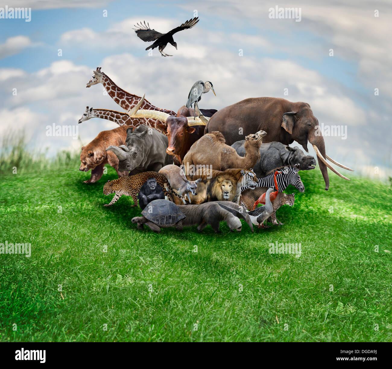 Wild Animals And Birds Collage