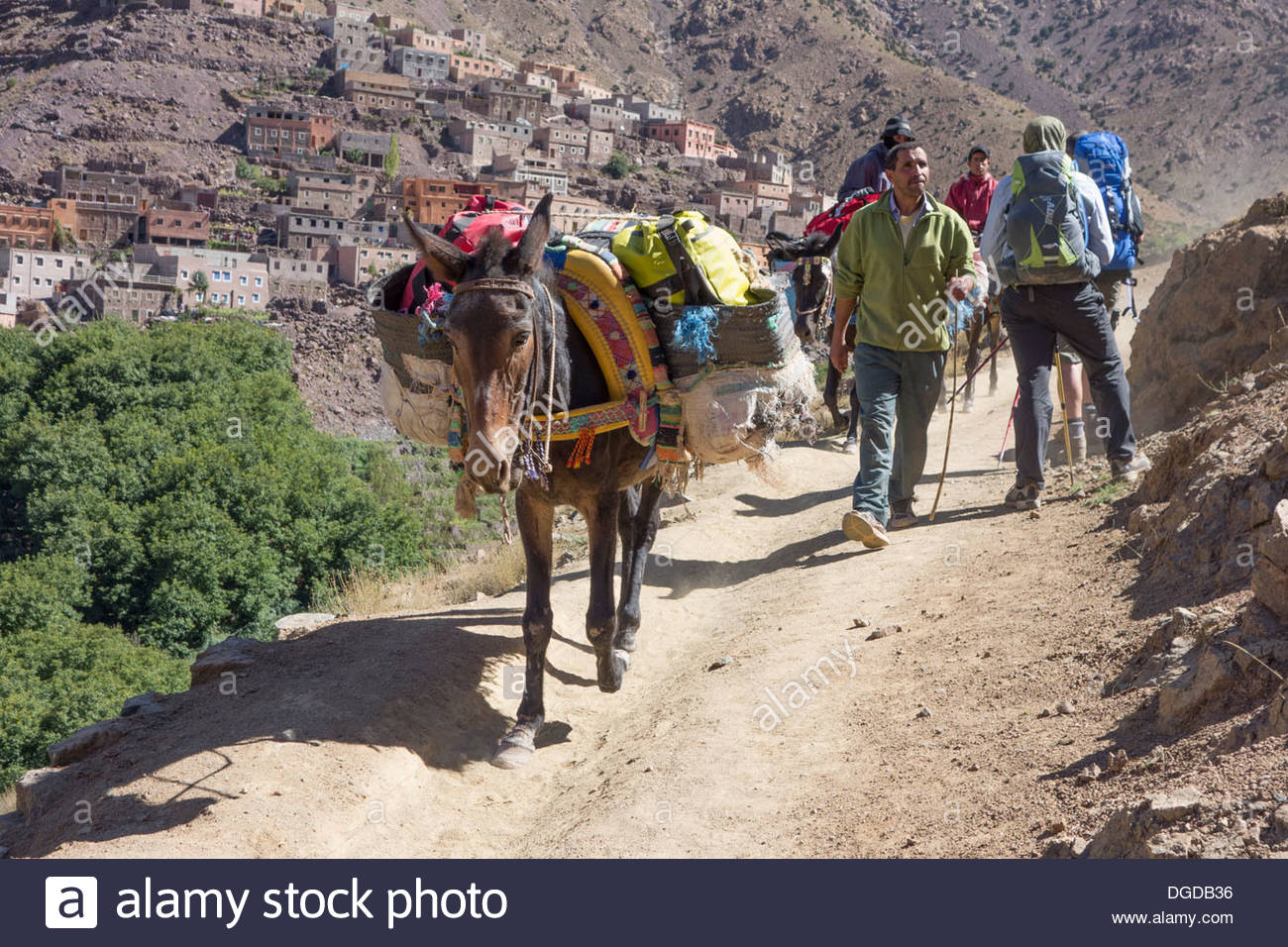 A mule and muleteer heads down the track towards Imlil in the High Atlas mountains, Morocco, passing trekkers - Stock Image