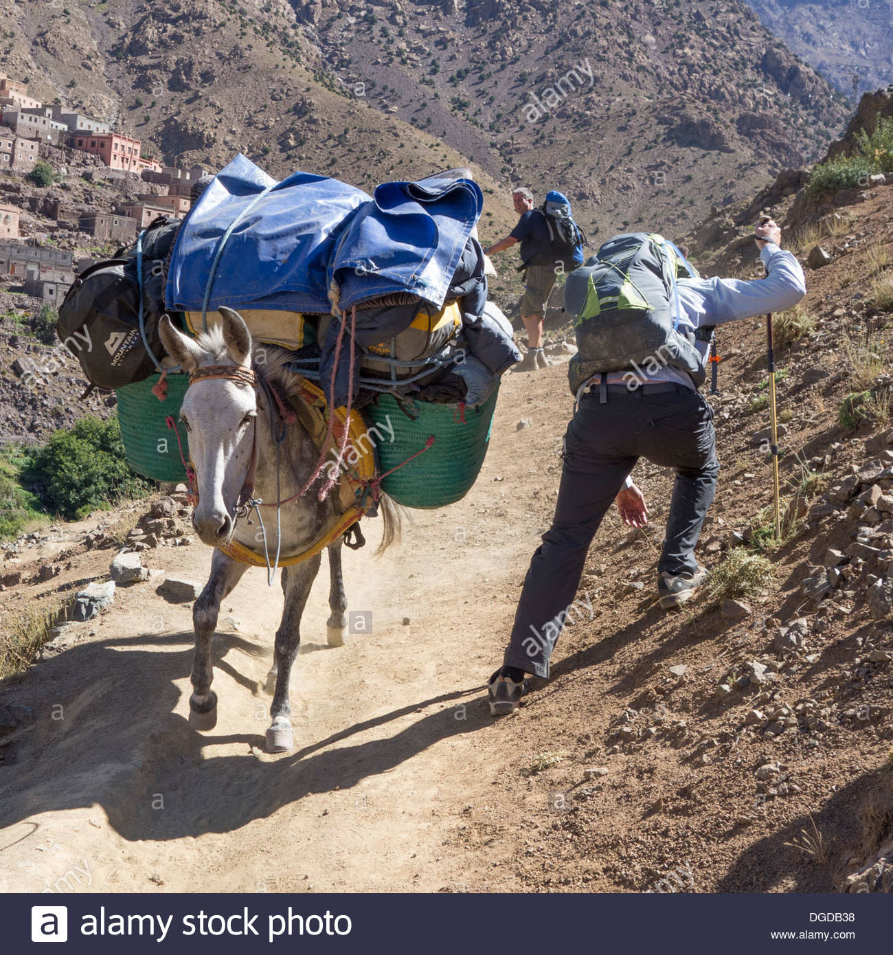 A mule and muleteer heads down the track towards Imlil in the High Atlas, Morocco, passing trekkers on the way up - Stock Image