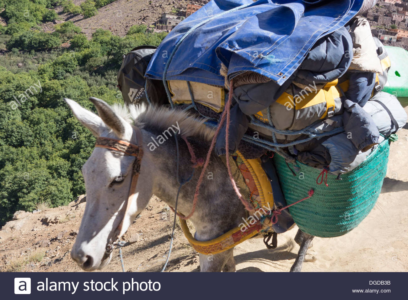 A mule heavily laden with trekkers kit heads down the trail to Imlil in the High Atlas mountains, Morocco - Stock Image