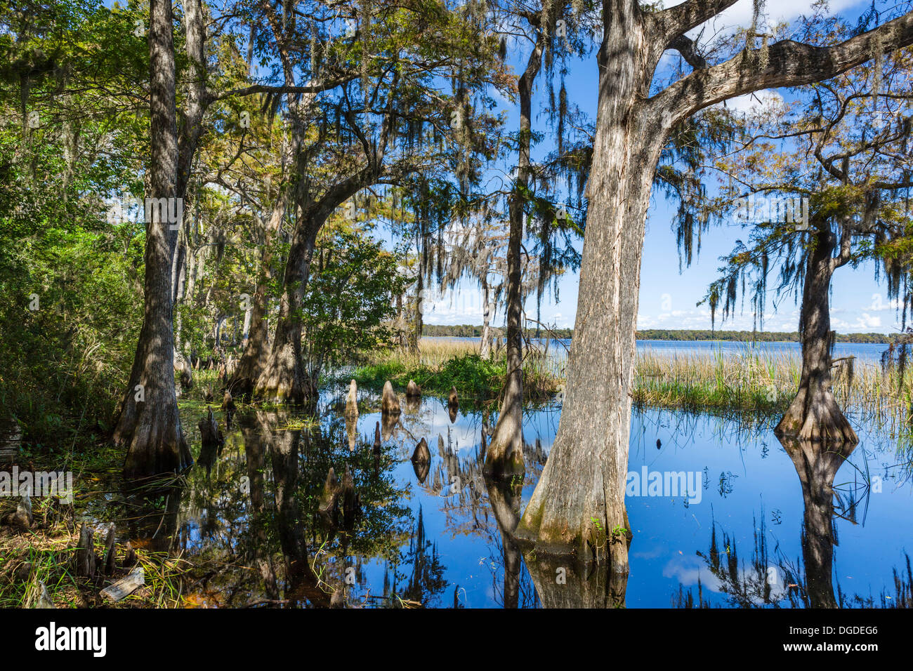 Lake Russell at the Nature Conservancy Disney Wilderness Preserve, Poinciana, Kissimmee, near Orlando, Central Florida, USA - Stock Image