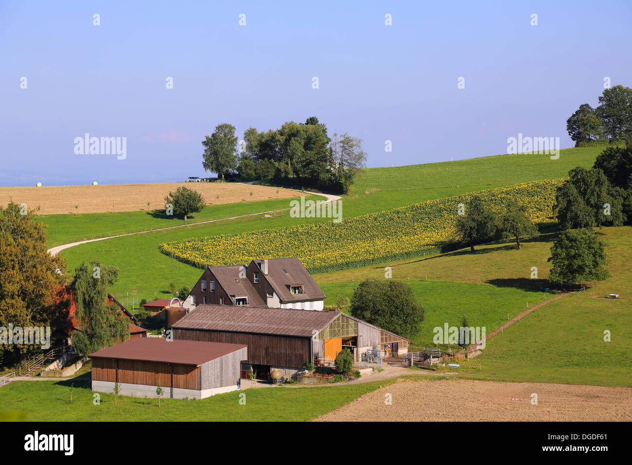 Farm house with fresh green field in Switzerland Stock Photo