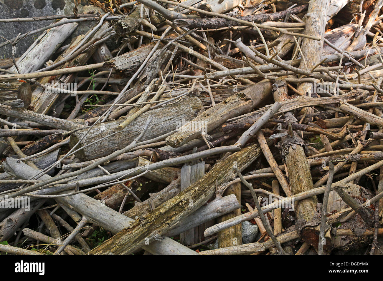 mess of the driftwood on the bank - Stock Image