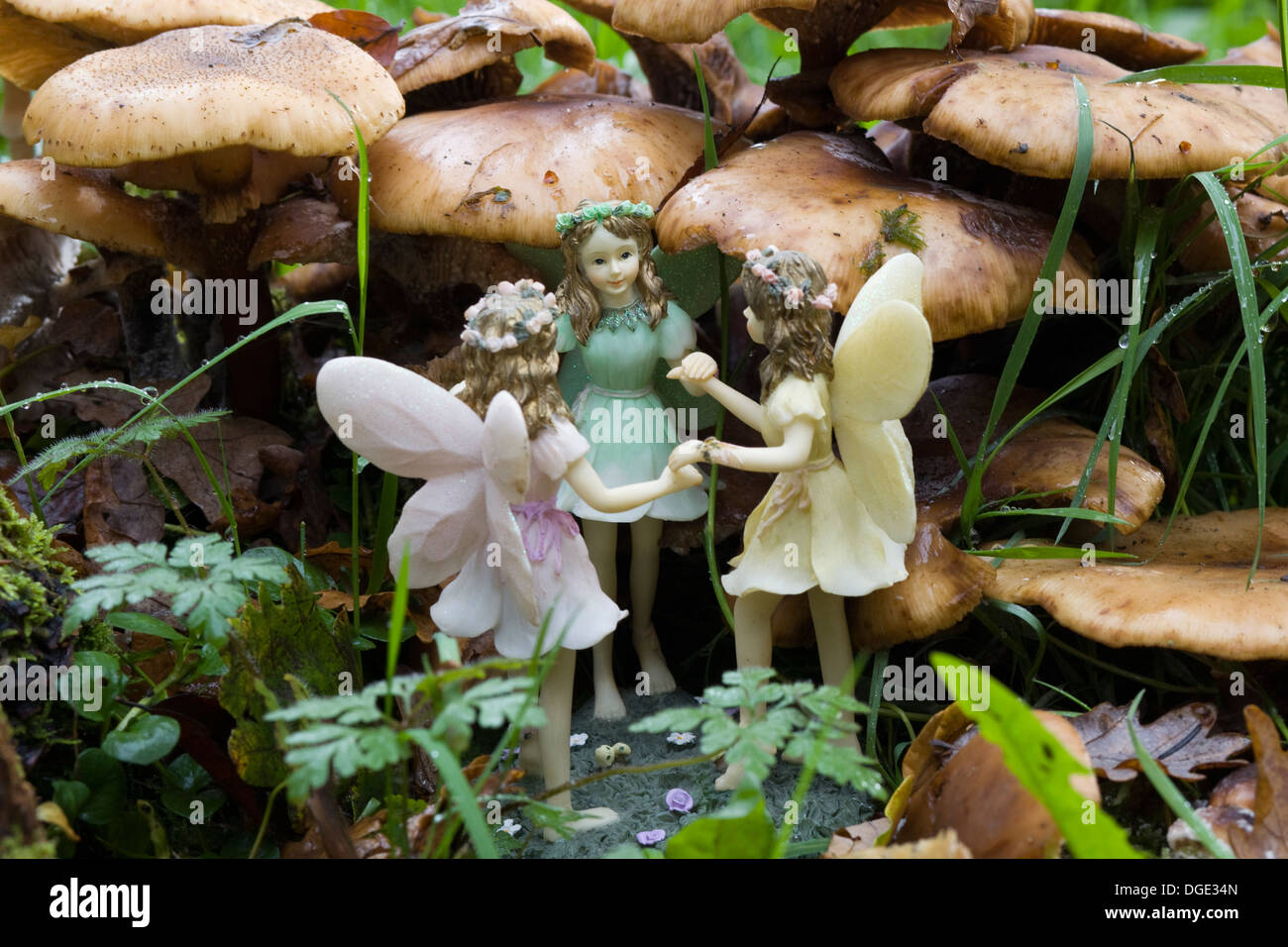 Fairies in the Garden Holding Hands in amongst Wild Mushrooms - Stock Image