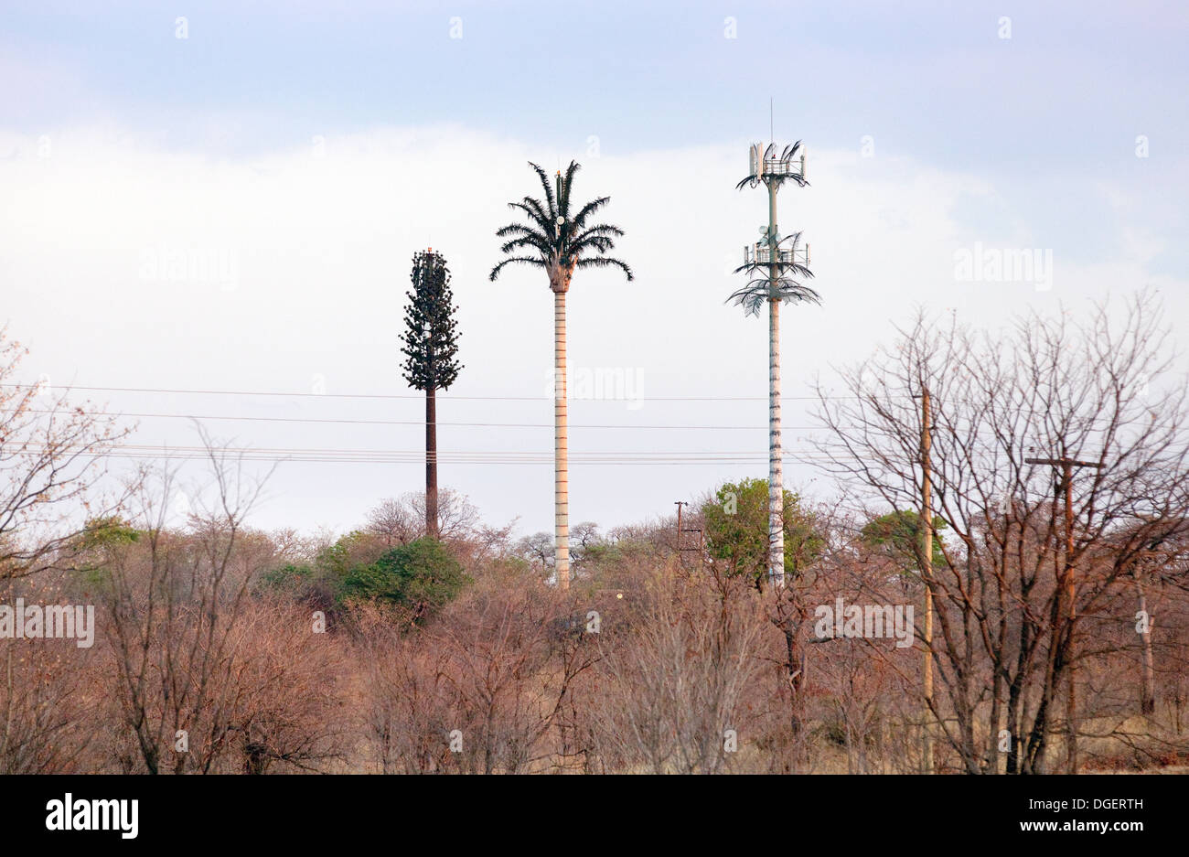 Three mobile phone masts disguised as trees in the Mosi oa Tunya National Park, near the Victoria Falls, Zambia Africa - Stock Image