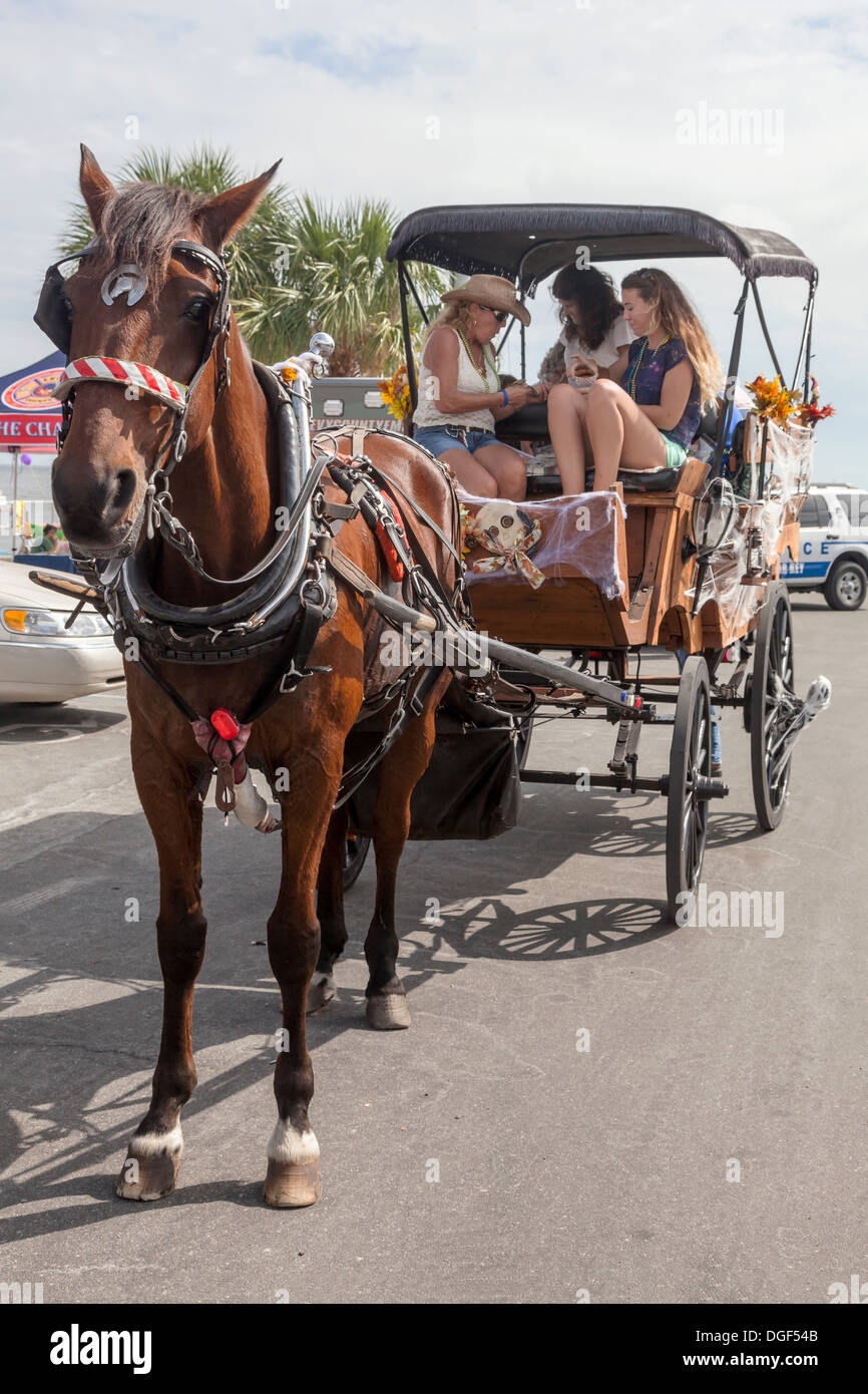Carriage horse waiting patiently for the next fare while three women sit eating in the buggy at a local festival. - Stock Image