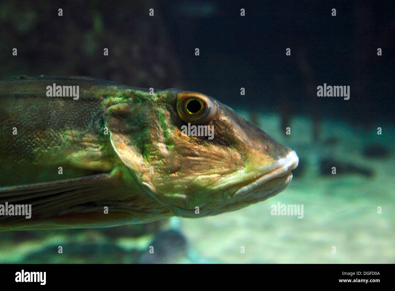 D-Oberhausen, Ruhr area, Lower Rhine, Rhineland, North Rhine-Westphalia, NRW, D-Oberhausen-Neue Mitte, Centro Park, Sea Life Adventure Park, Sea Life Center, aquarium, fish - Stock Image