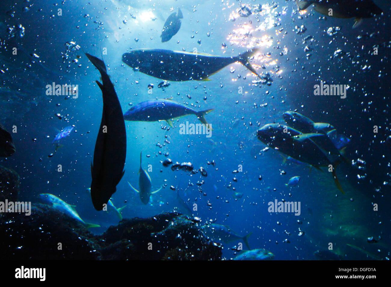 D-Oberhausen, Ruhr area, Lower Rhine, Rhineland, North Rhine-Westphalia, NRW, D-Oberhausen-Neue Mitte, Centro Park, Sea Life Adventure Park, Sea Life Center, aquarium, fishes - Stock Image