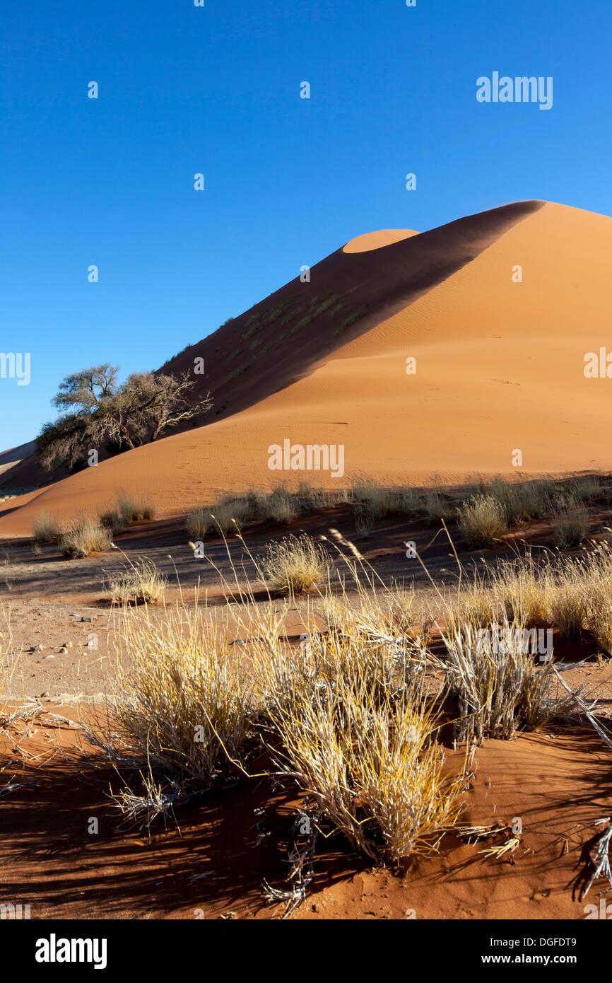 Sand dune in the evening light, Sossusvlei, Namib Desert, Namib Naukluft Park, Namibia - Stock Image
