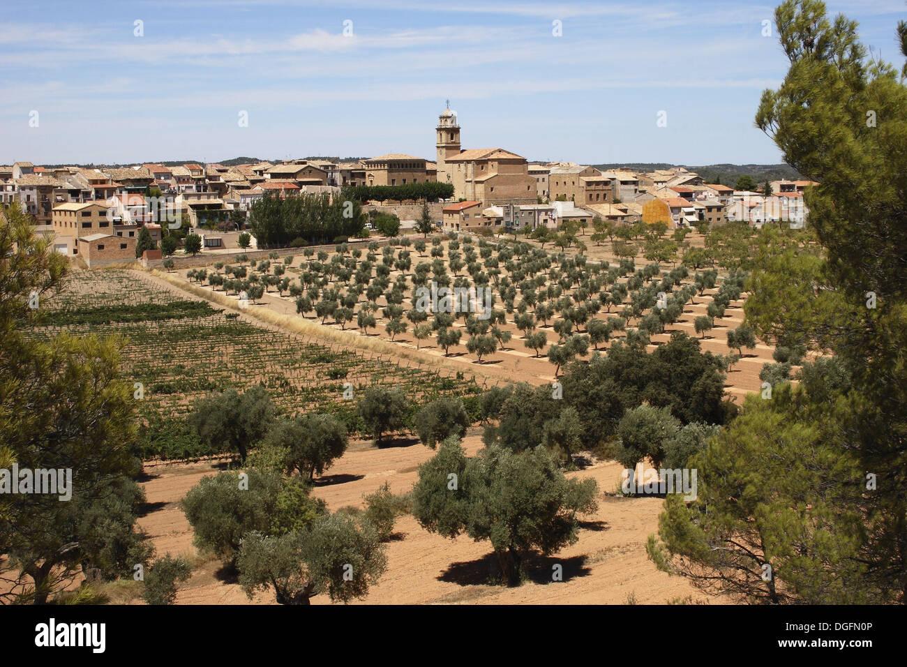 Terra Chat Tarragona