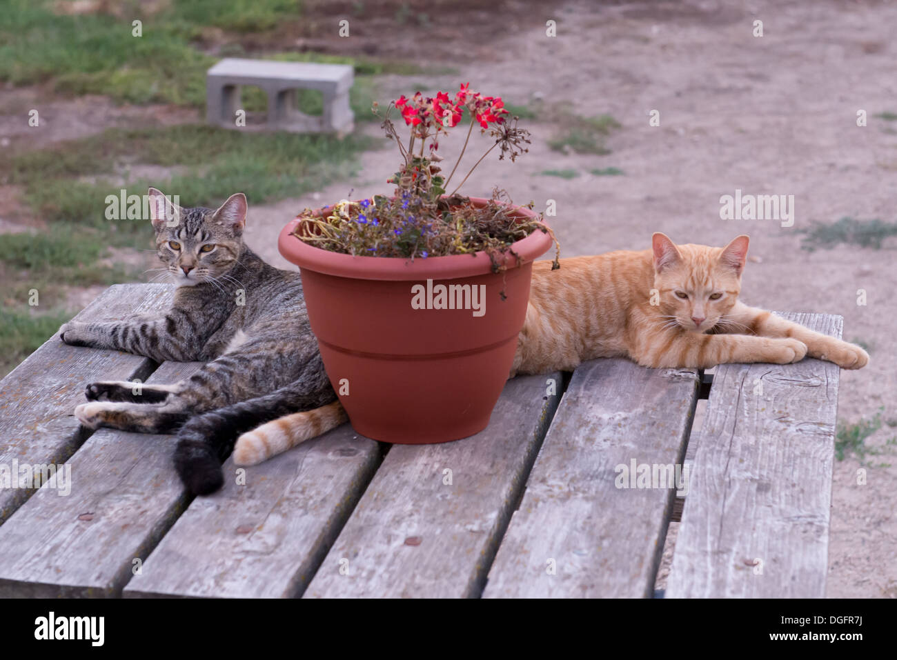 Two cats relaxing on a table Stock Photo