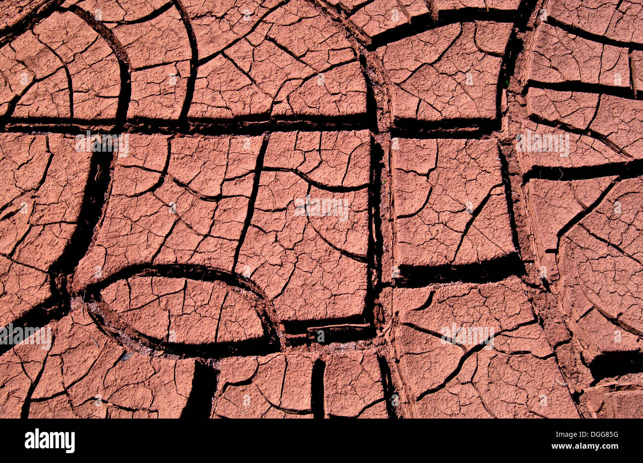 Baked Earth Cracks, Texas - Stock Image