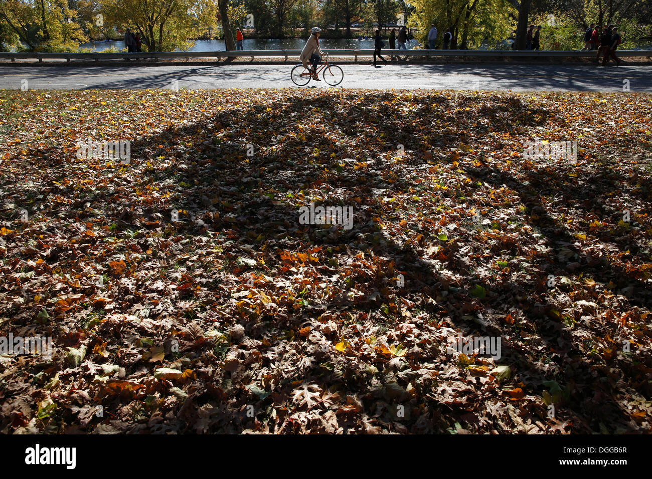 Autumn leaves on the ground and a bicyclist on Memorial Drive, Cambridge, Massachusetts, USA - Stock Image