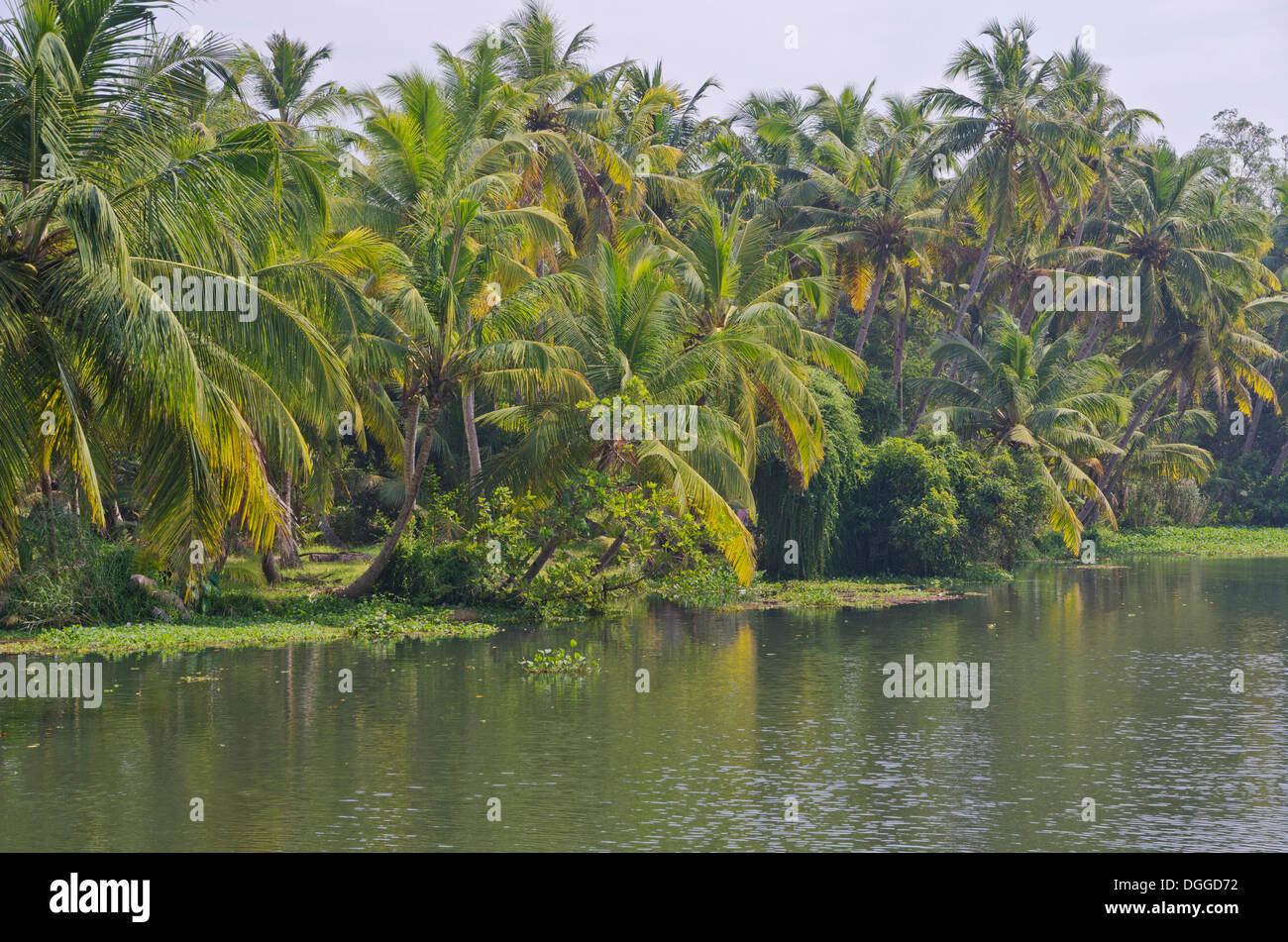 Backwaters, Kerala, India, Asia - Stock Image
