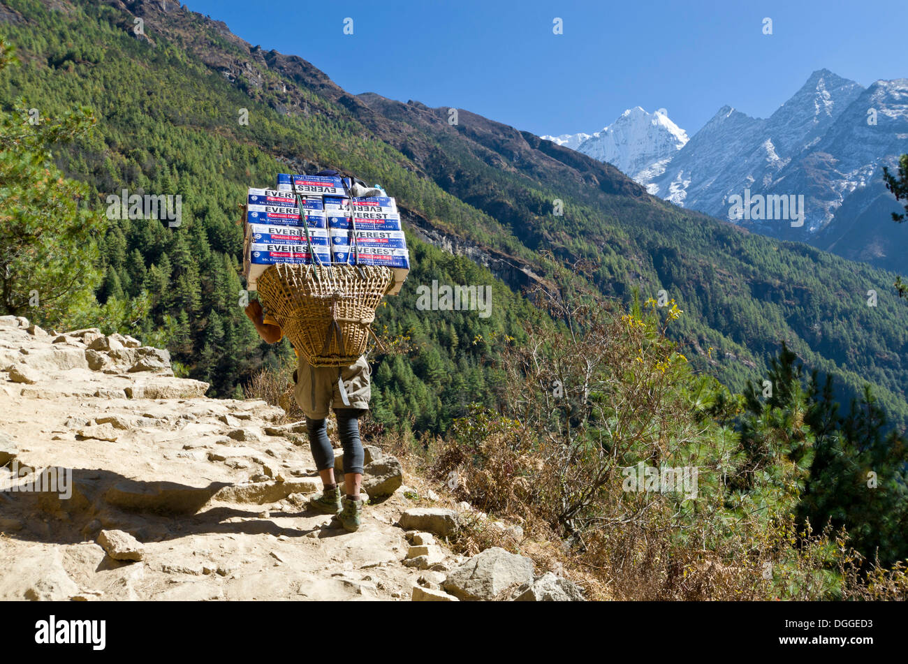 Porter carrying more than 100 kg heavy load of beerbottles up an ascending track, Namche Bazar, Solukhumbu District - Stock Image