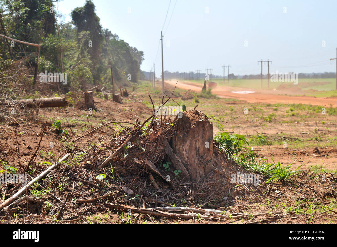 Deforestation of the Amazon rainforest for road construction, Sinop, Mato Grosso, Brazil, South America - Stock Image