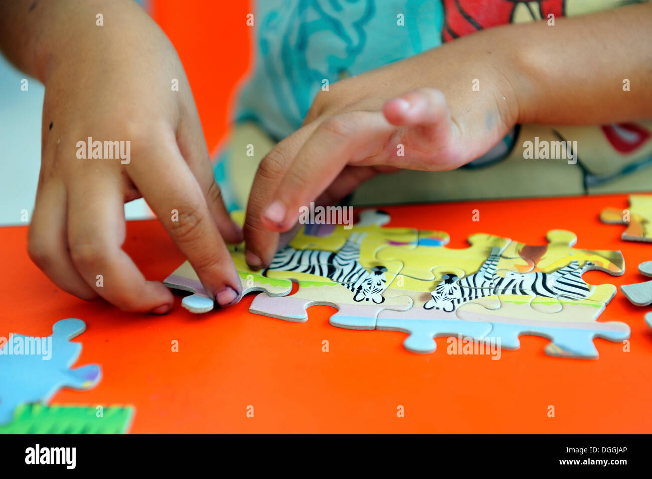 Children's hands doing a jigsaw puzzle with zebras, Queretaro, Mexico, North America, Latin America - Stock Image