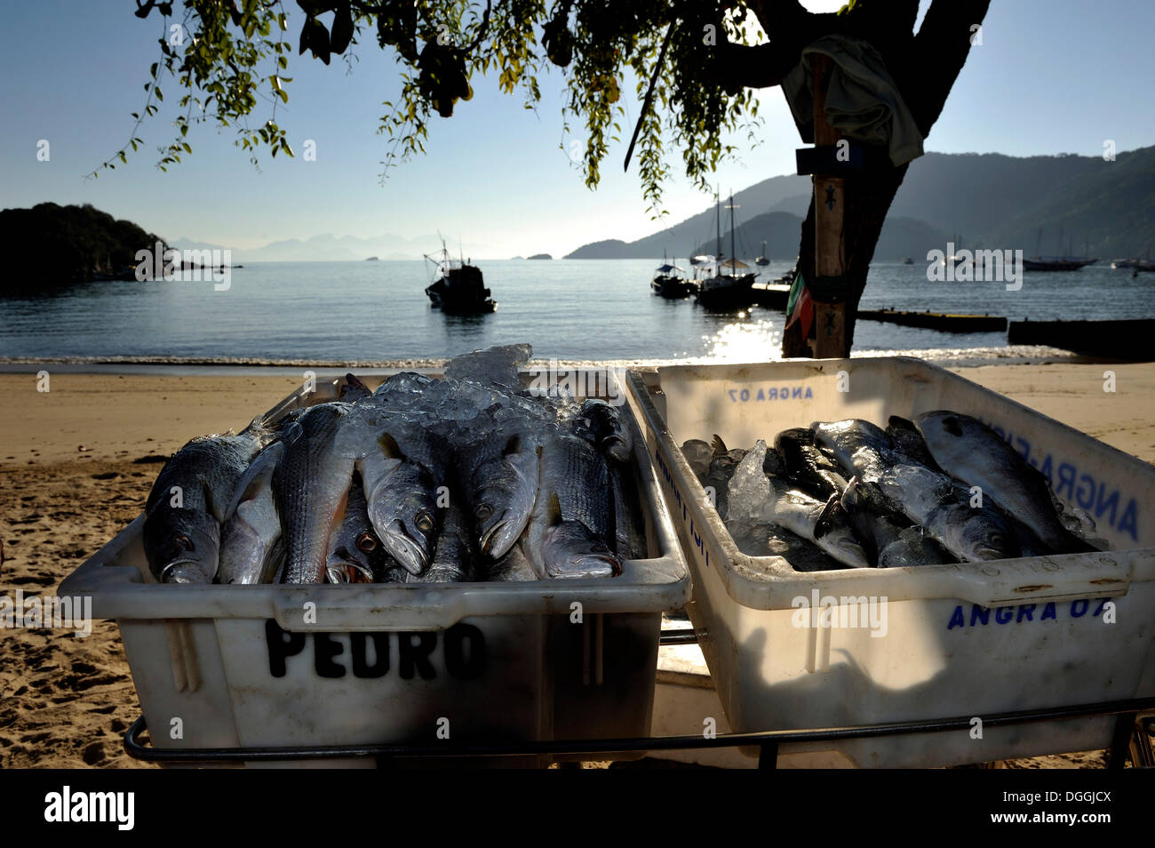 Ice-cooled fish for sale at the beach, Ilha Grande, state of Rio de Janeiro, Brazil, South America - Stock Image