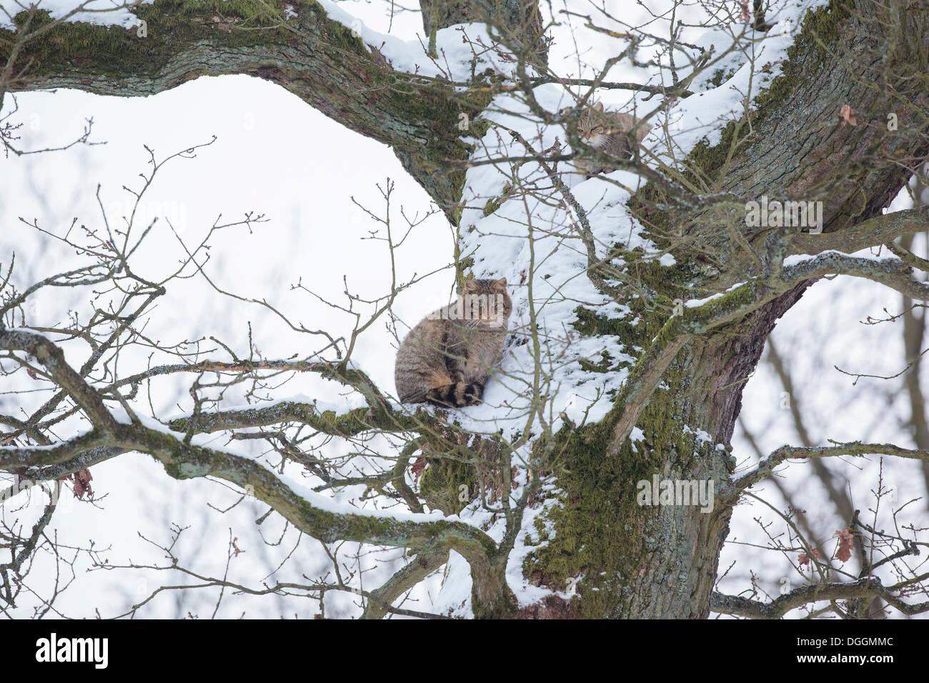limburg-weilburg sucht single mann sprüche frau lustige  Friedhof Weilmünster-Laubuseschbach (Limburg-Weilburg) - Grabsteine. Friedhof Weilmünster-Laubuseschbach (Limburg-Weilburg) - Grabsteine.