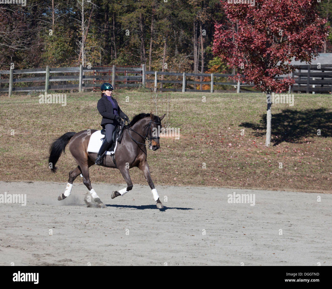 Woman riding Danish warmblood dressage horse - Stock Image